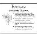 B: Bee Balm