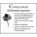 C: Coneflower