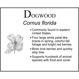 D : Dogwood