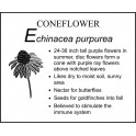 E : Echinacea