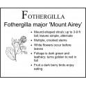 F: Fothergilla