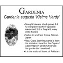 G: Gardenia