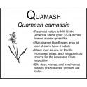 Q: Quamash