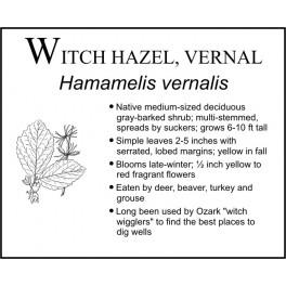 W: Witch Hazel (Vernal)