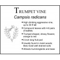 T: Trumpet Vine