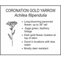 <i>Achilea filipendulia</i> : CORONATION GOLD YARROW