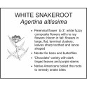 <i>Agertina altissima</i> : WHITE SNAKEROOT